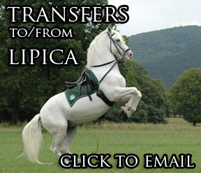 Email us to get to Lipica!