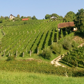 Wine Tasting Tour in the Bizeljsko/Dolenska Region of Slovenia!